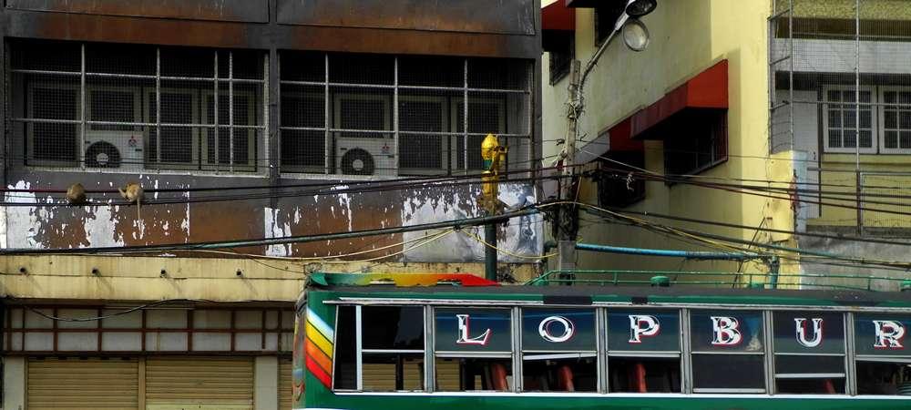lopburi malpie miasto azja tajlandia