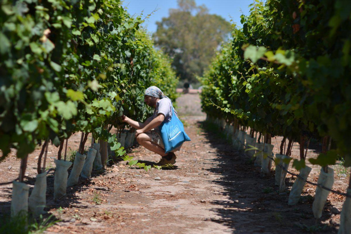 winnice mendoza gdzie na wakacje z winem