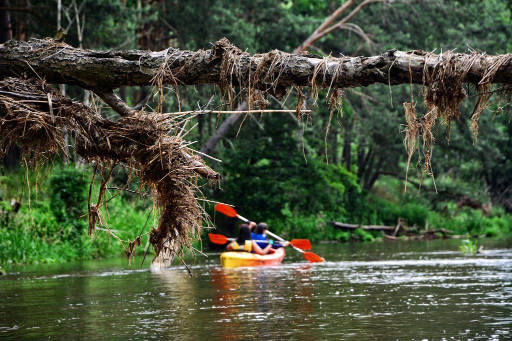 spływ kajakowy po radomce ryczywół brzoza kajaki w okolicy warszawy