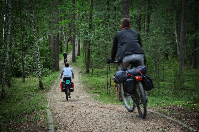 bory tucholskie ścieżka rowerowa wycieczka rowerowa po Borach tucholskich
