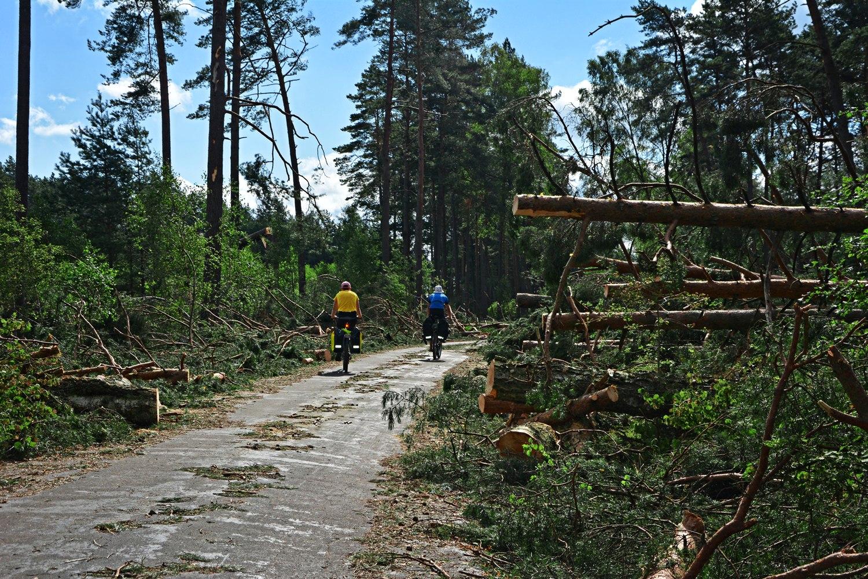 kaszuby bory tucholskie rowerem bory tucholskie po huraganie