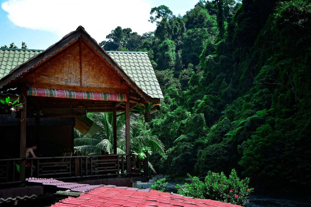 bukit lawang gdzie spac trekking w dżungli