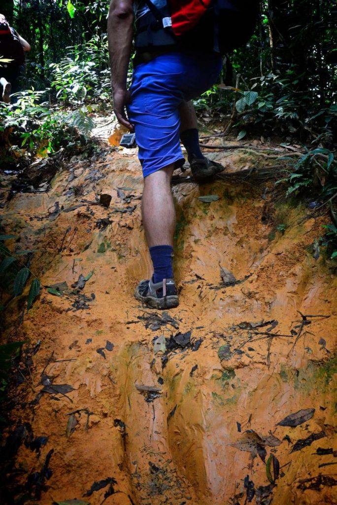 trekking z orangutnami bukit lawang szlak pomaranczowa ziemia