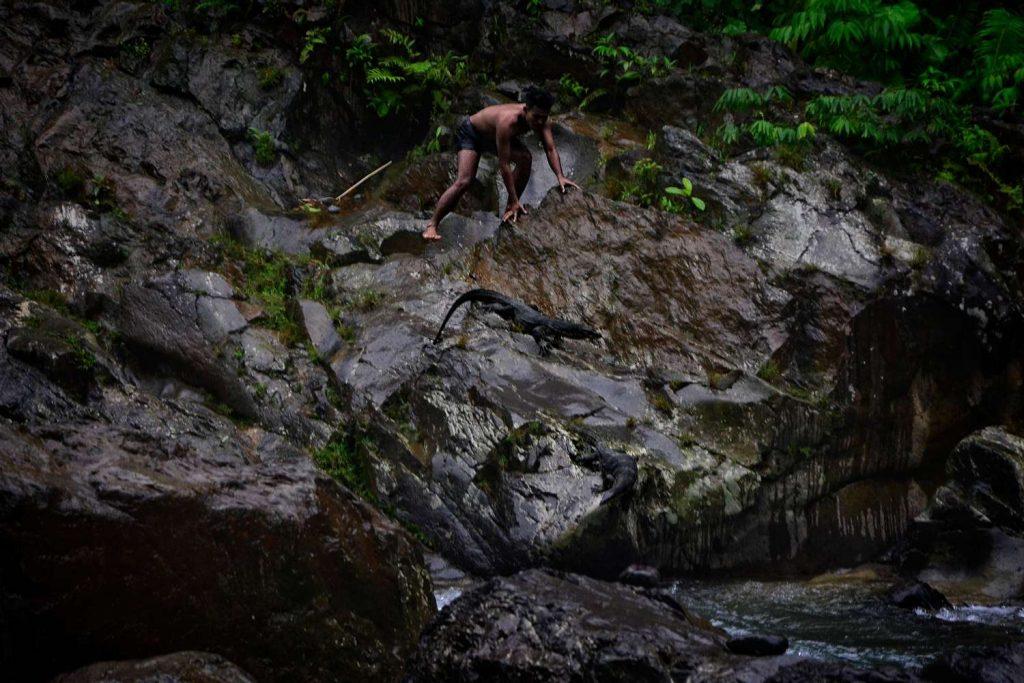 Trekking w bukit lawang przewodnicy jaszczurki na sumatrze warany