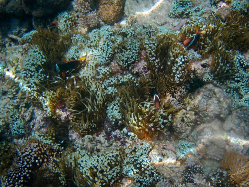 rafa koralowa ryby indonezja snorkeling w indonezji