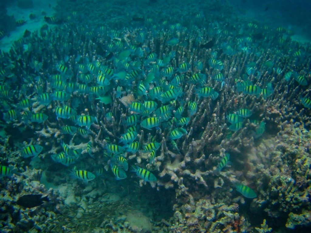 menjangan snorkeling