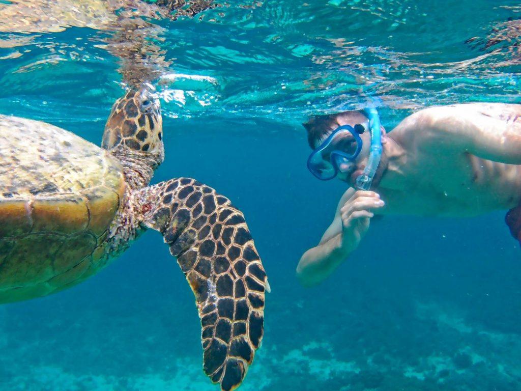 snorkeling gili snorkeling w indonezji gdzie są najlepsze miejsca snorkelingowe żółwie na gili