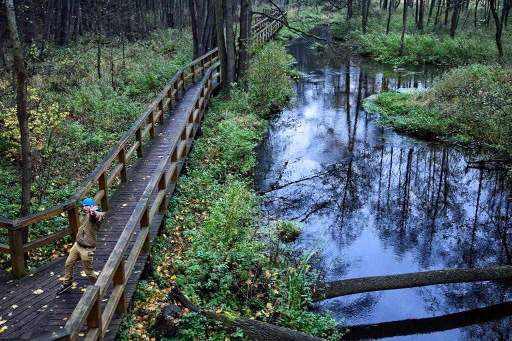 krolewskie zrodla kozienice puszcza kozienicka pomosty w lesie