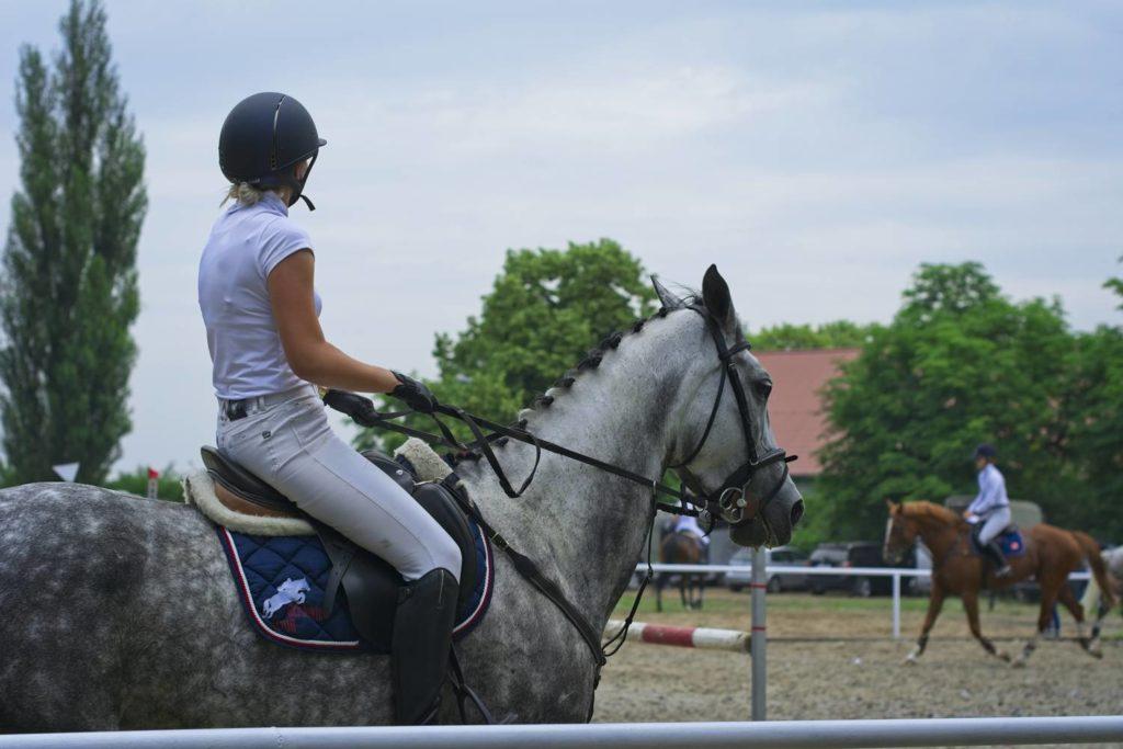 stadnina koni kozienice zawody jezdzieckie konie