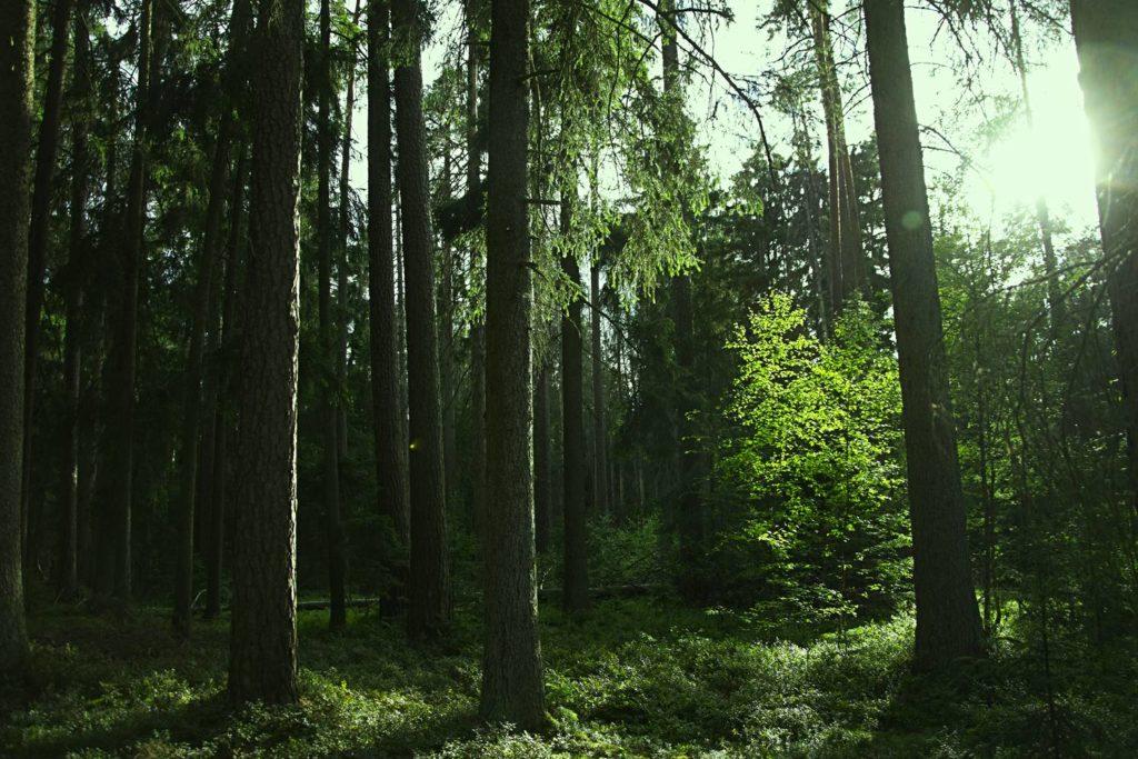 REZERWAT CZARNIA jak dojechac gdzie jest rezerwat czarnia kurpie puszca kurpiowska