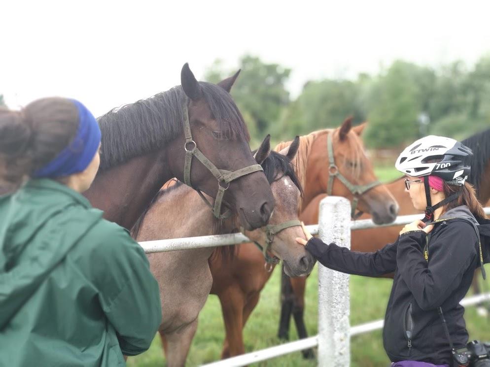 stadnina janow podlaski konie wycieczka rowerowa janow