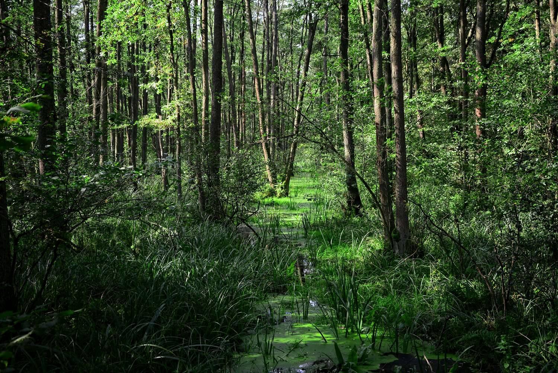 puszcza kampinoska gdzie na rower w okolicach warszawy lasy wokol warszawy