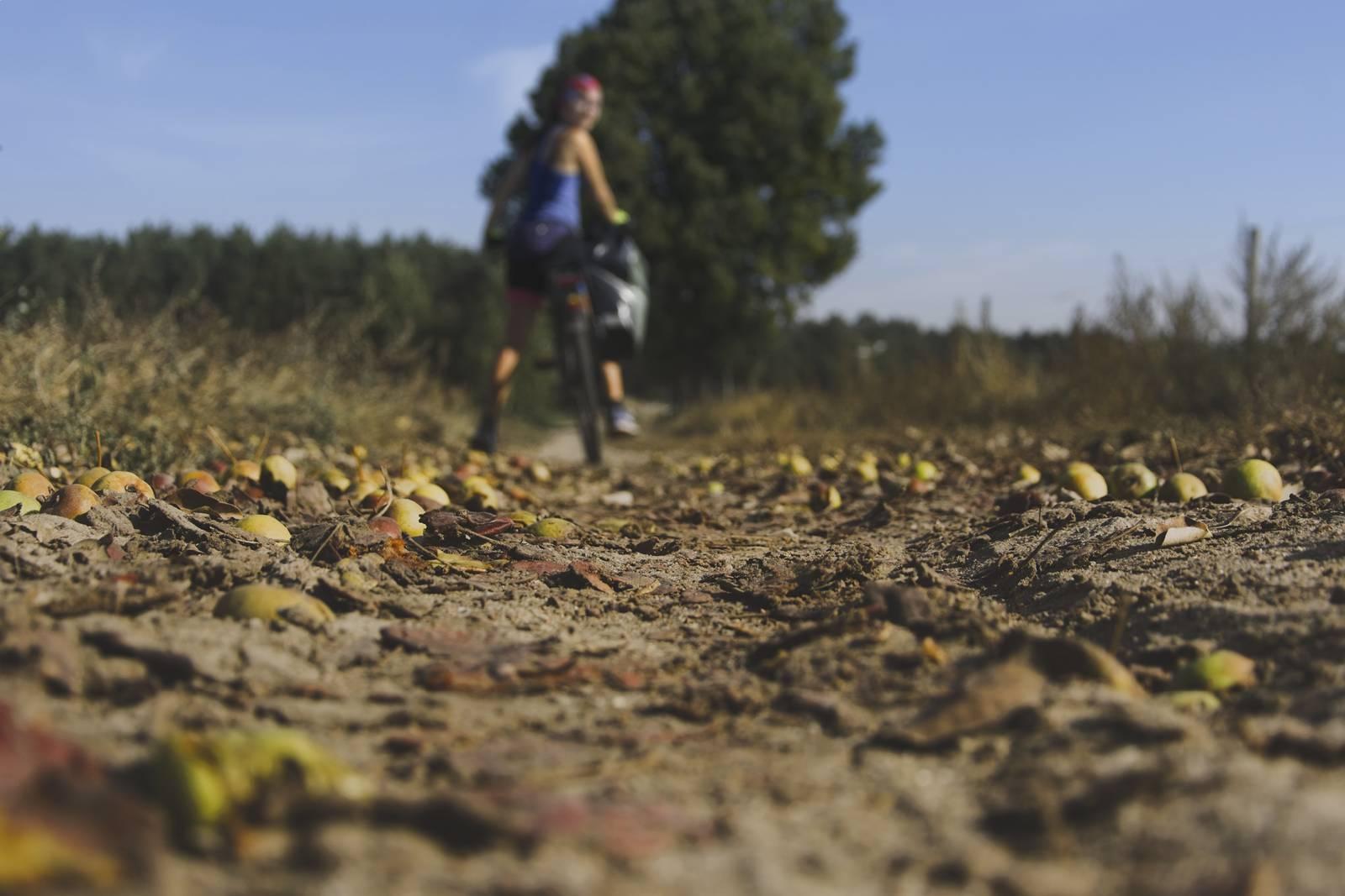 trasy rowerowe bydgoszcz koronowo rowerem wokol zalewu koronowskiego