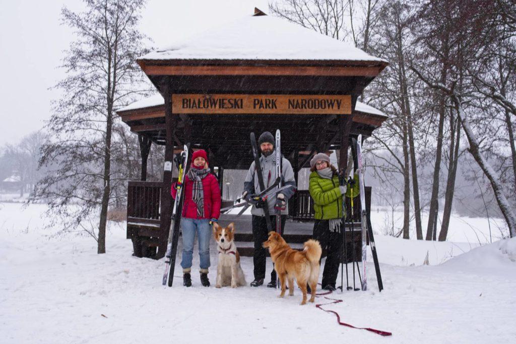 bialowieza biegowki narty biegowe gdzie wypozyczyc gdzie jechac