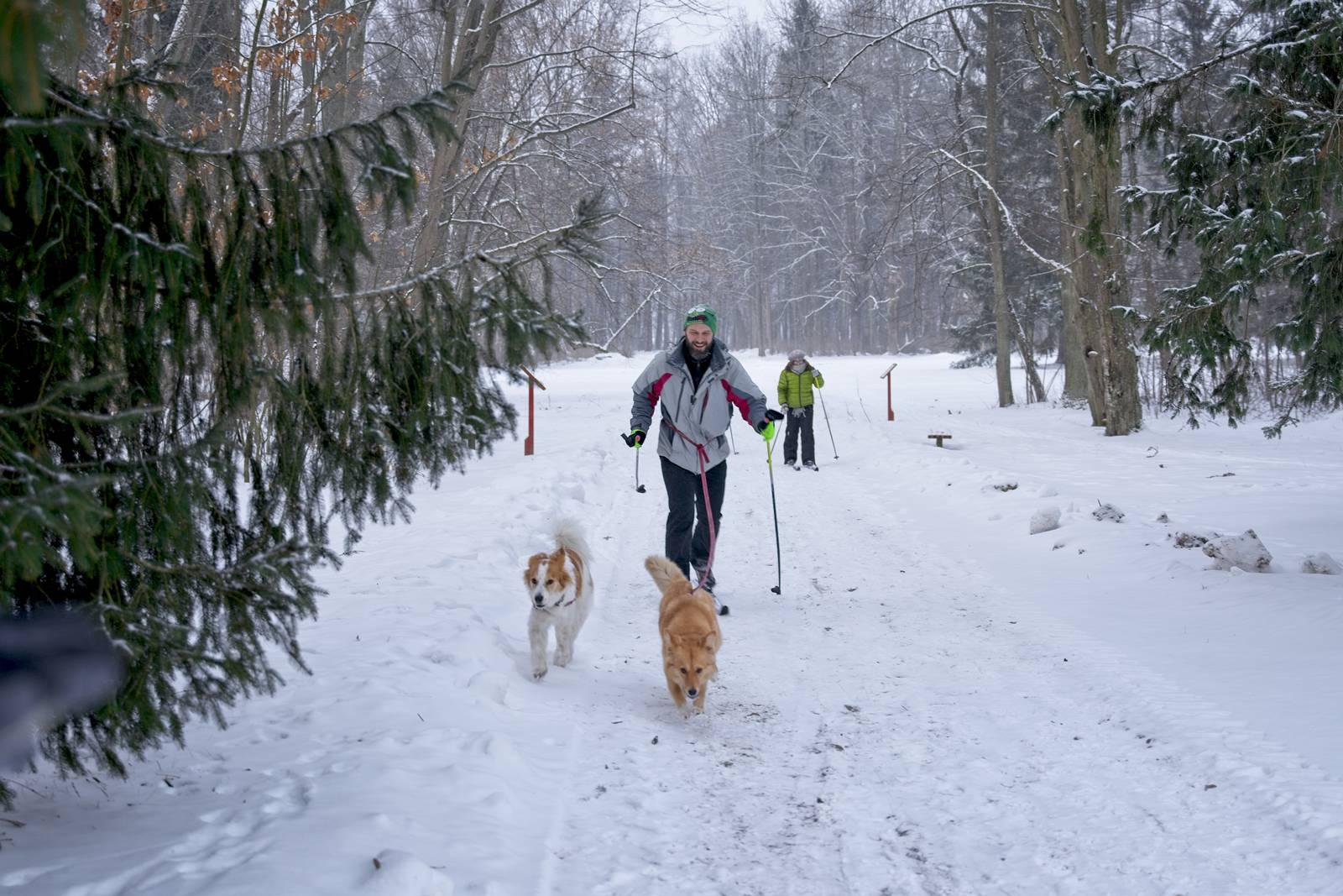 bialowieza biegowki narty biegowe w bialowiezy puszcza bialowieska zima