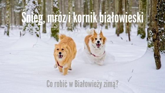 bialowieza zima puszcza bialowieska na ferie co robic w puszczy bialowieskiej atrakcje