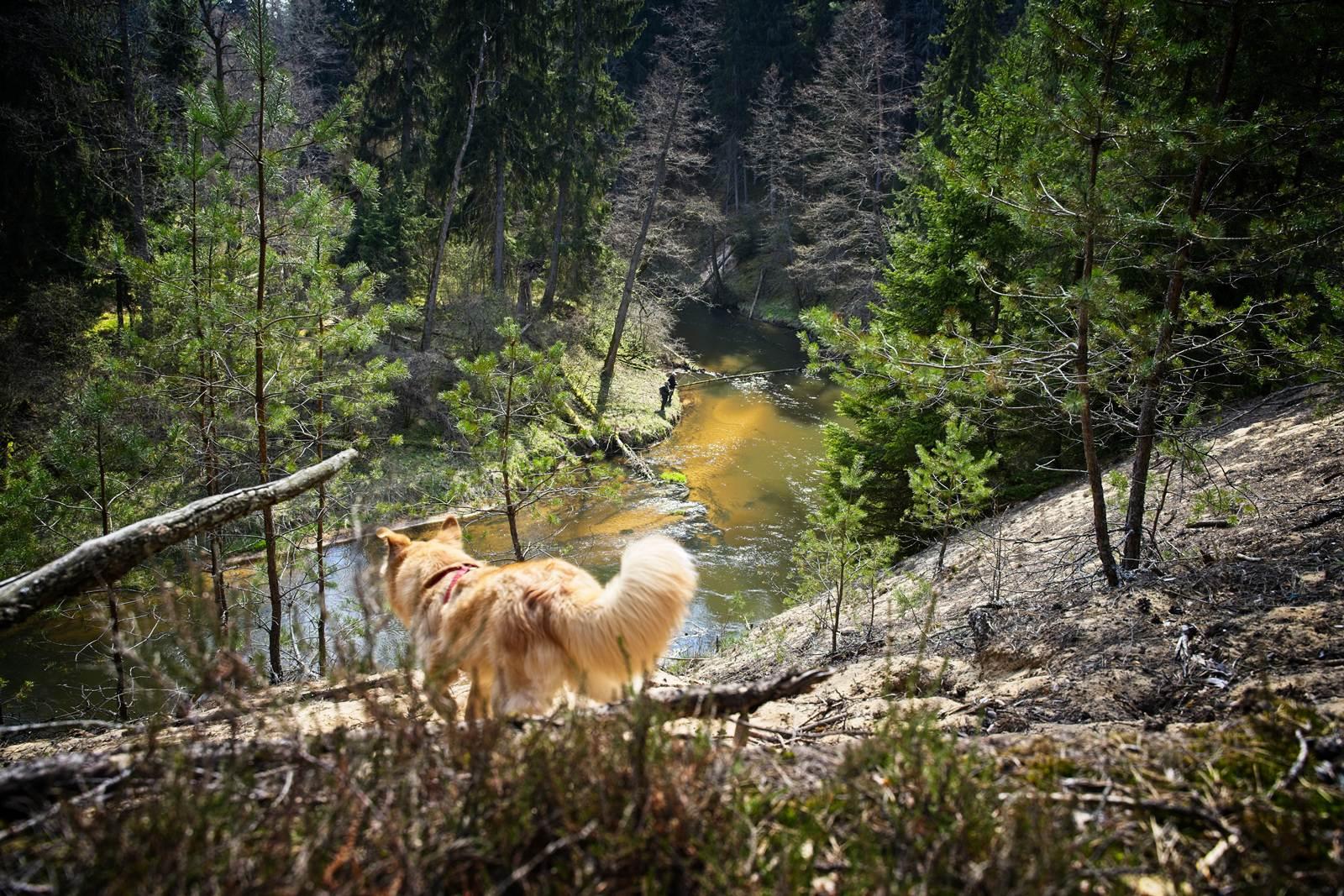 dzukijski park narodowy litwa