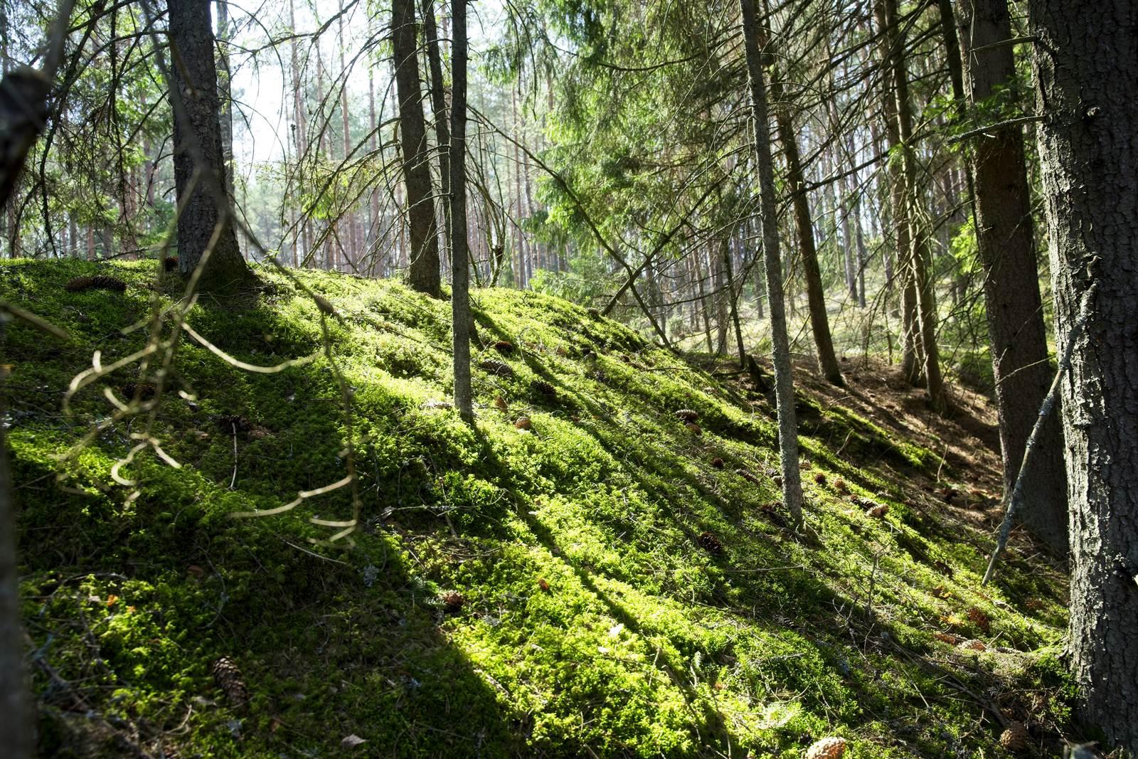 dzukijski park narodowy lasy na litwie