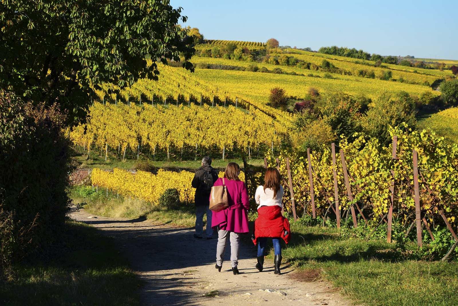 bad durkheim winnice niemieckie barenhof wino niemieckie