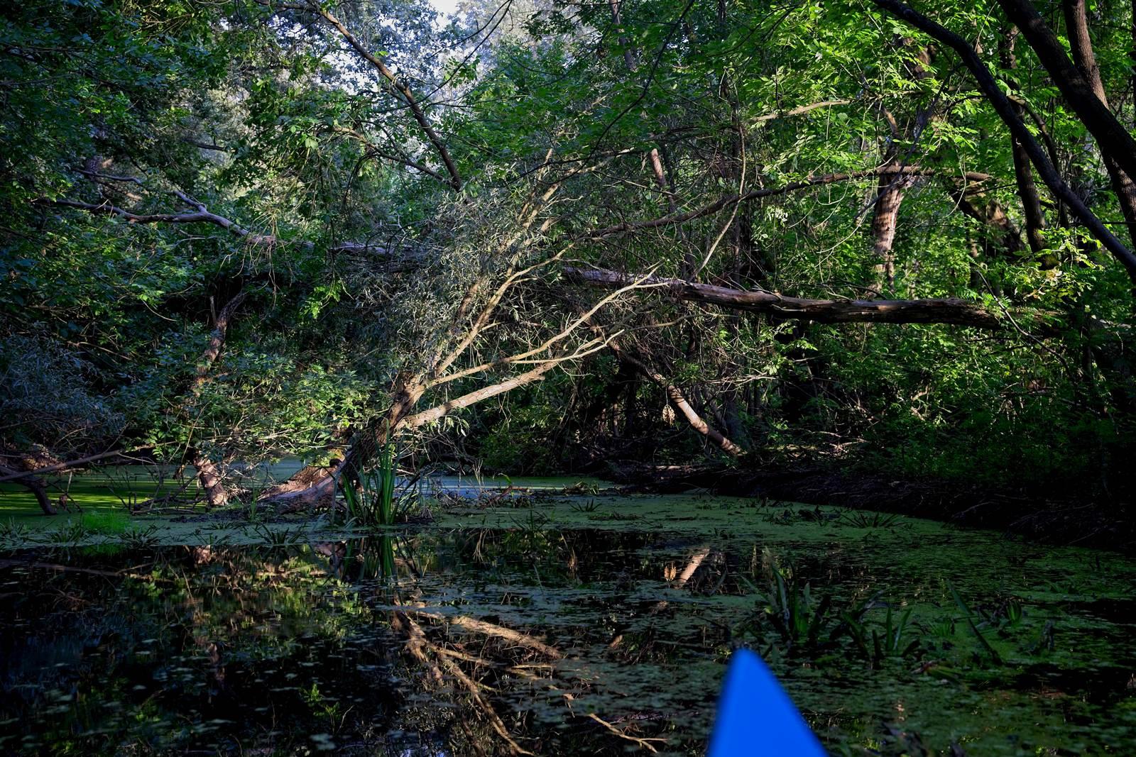 bodrogzug splyw kajakowy trasa splywu gdzie wypozyczyc kajak