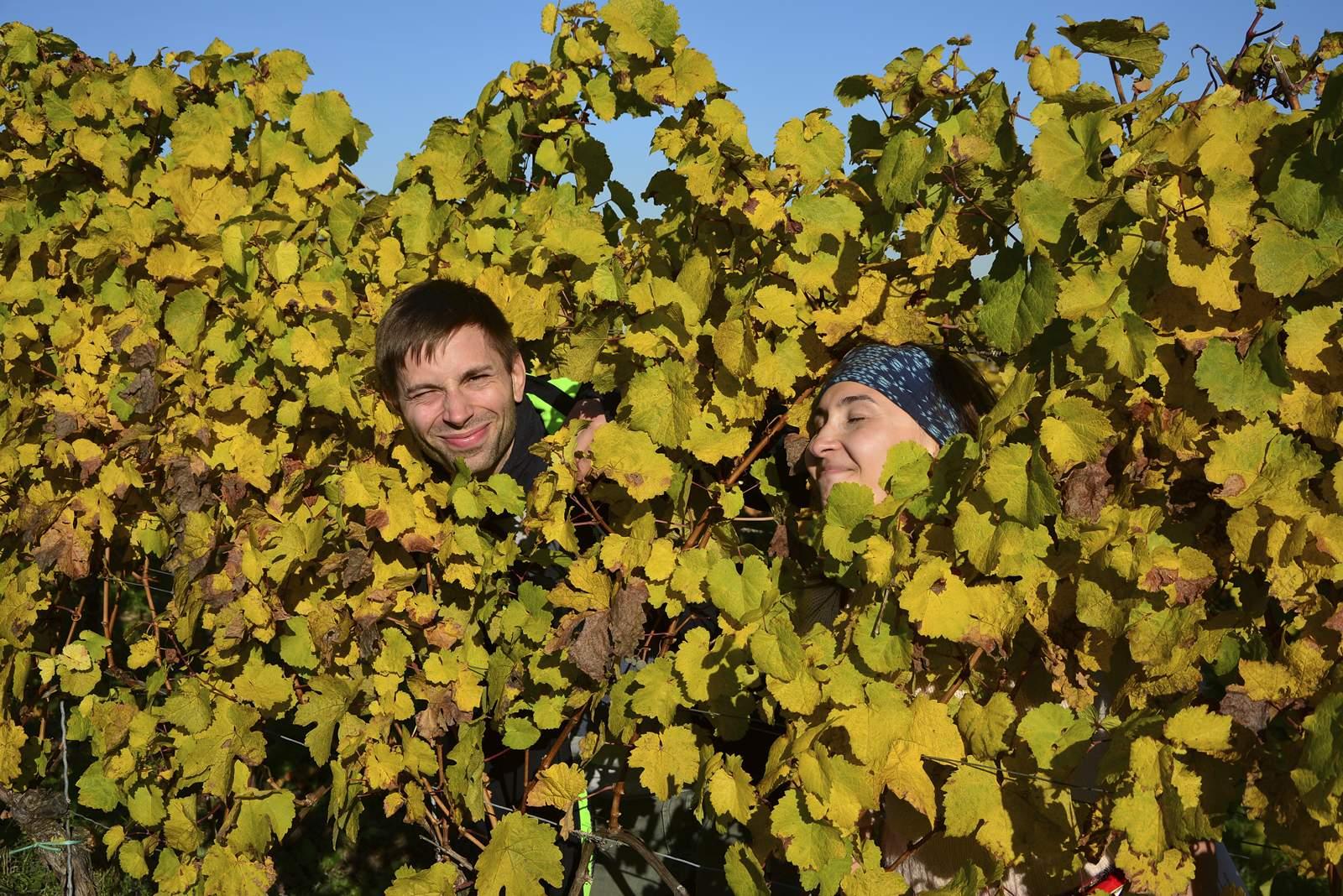 enoturystyka winnice wakacje z winem gdzie wyjechać do winnic