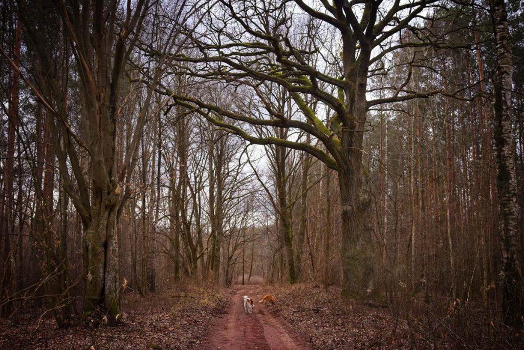 mazowiecki park krajobrazowy gdzie na spacer gdzie nie ma ludzi w lesie