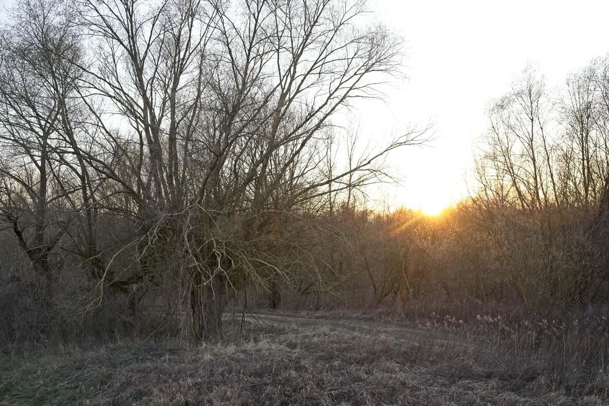 gdzie nie ma ludzi okolice warszawy spacer w lesie spacer nad rzeka