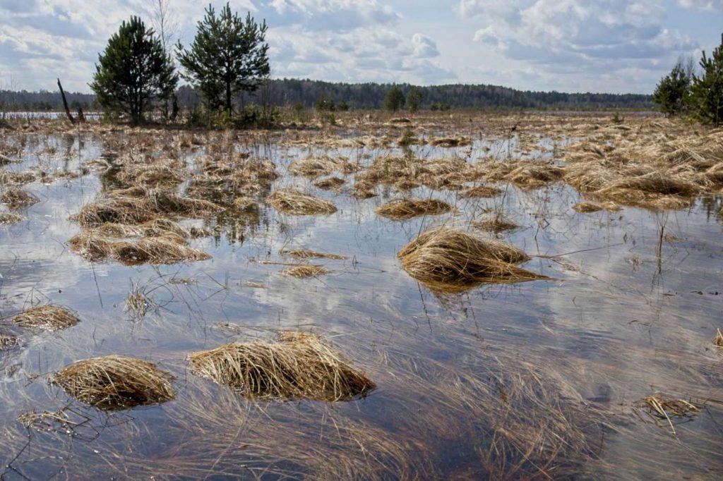 okolny lug bagna w puszczy kozienickiej jezioro w lesie