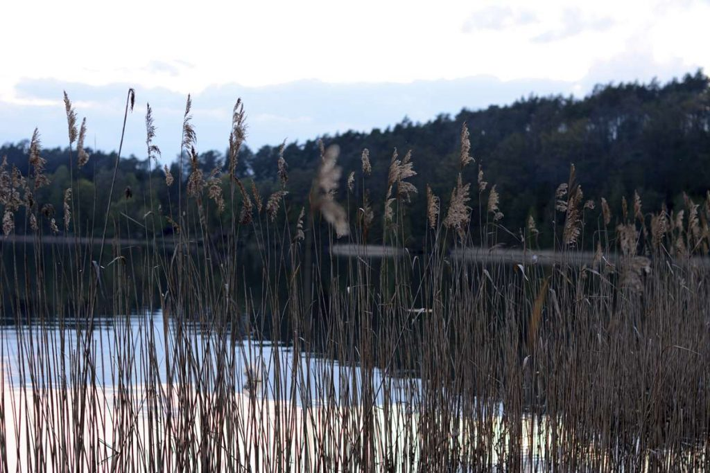 jezioro zbiczno brodnica ryte błota gdzie nad jezioro wakacje nad jeziorem gdzie nie ma ludzi nad jeziorem