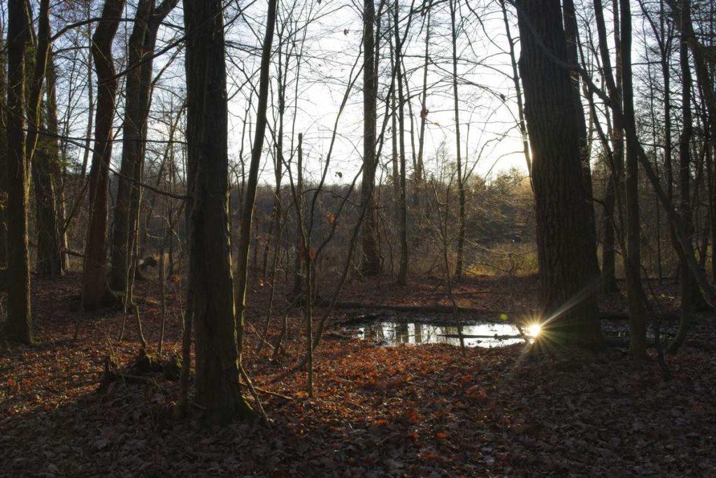 rezerwat brzezniczka puszcza kozienicka gdzie na spacer w puszczy kozienickiej szlaki