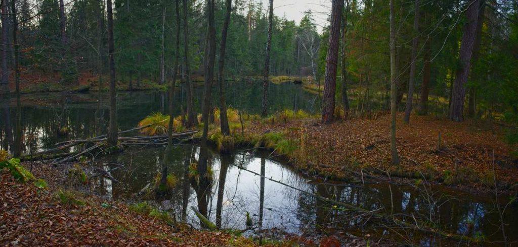 gd=zie na spacer puszcza kozienicka co zobaczyc w puszczy kozienickiej rezerwat brzezniczka jeziorko w lesie