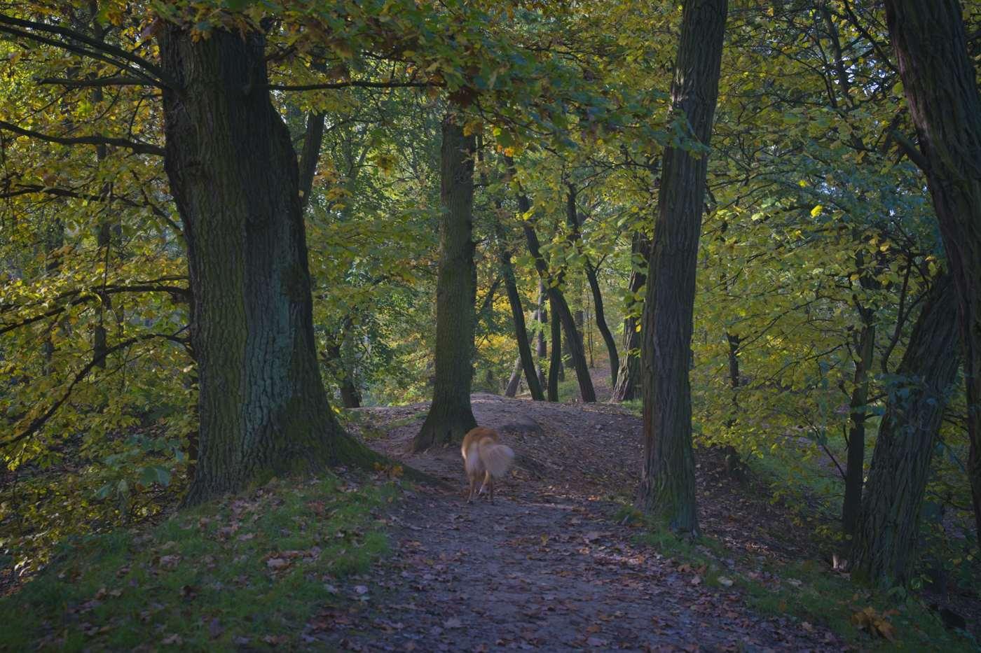 fort bema spacer z psem zwiedzanie fortu bema