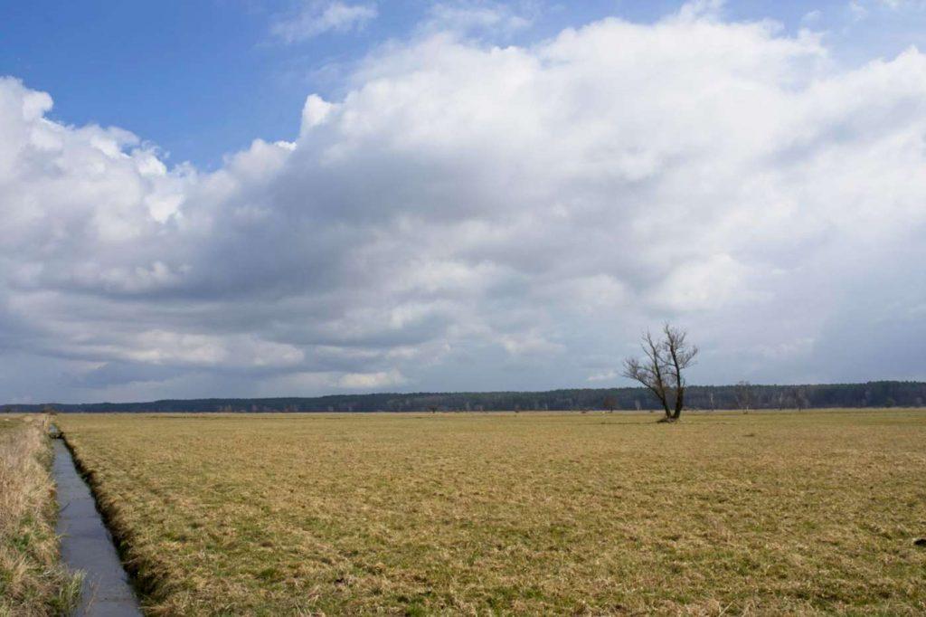 pulwy bagno puszcza biala narew laa z samotnym drzewem szlaki piesze mazowsze