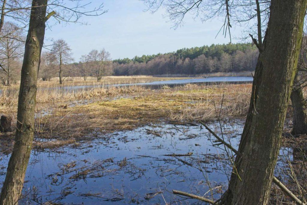 rezerwat czapliniec puszcza biała rozlewiska narwi