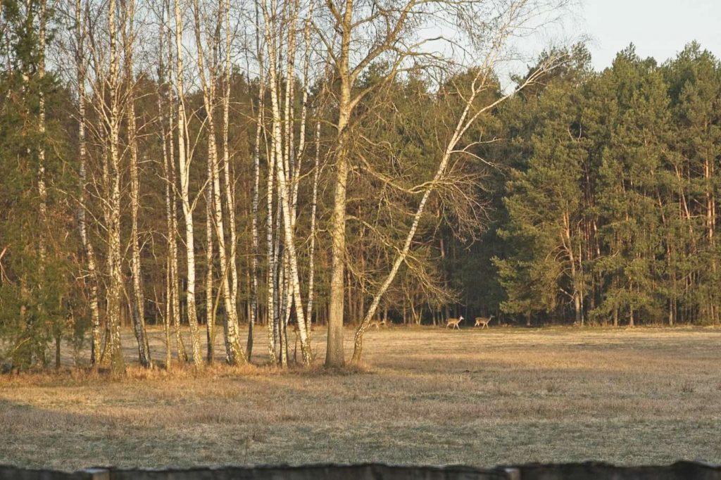 puszcza biala sarny domek w srodku lasu blisko warszawy tocznabiel