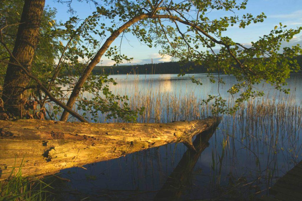 jezioro zbiczno brodnicki park krajobrazowy pojezierze brodnickie